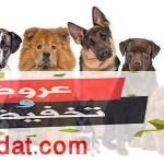 أسعار الكلاب 2019 في مصر لجميع الأنواع وتعرف على مميزات كل كلب منهما بالتفصيل