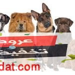 أسعار الكلاب 2020 في مصر لجميع الأنواع وتعرف على مميزات كل كلب منهما بالتفصيل